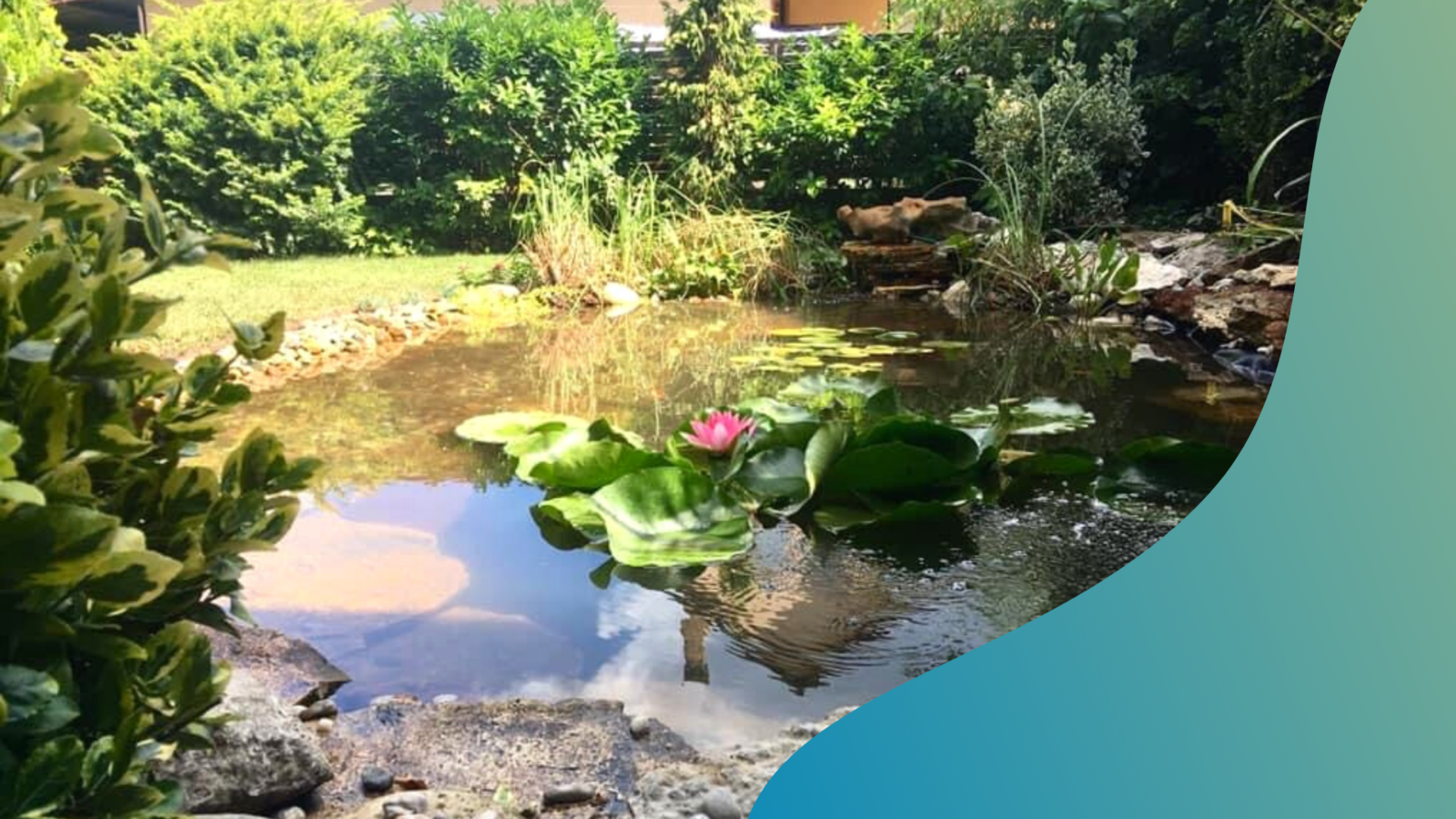 7 tipp a tiszta kerti tóért