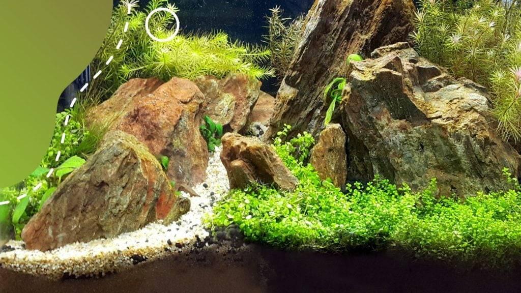 akvárium talaj fontossága