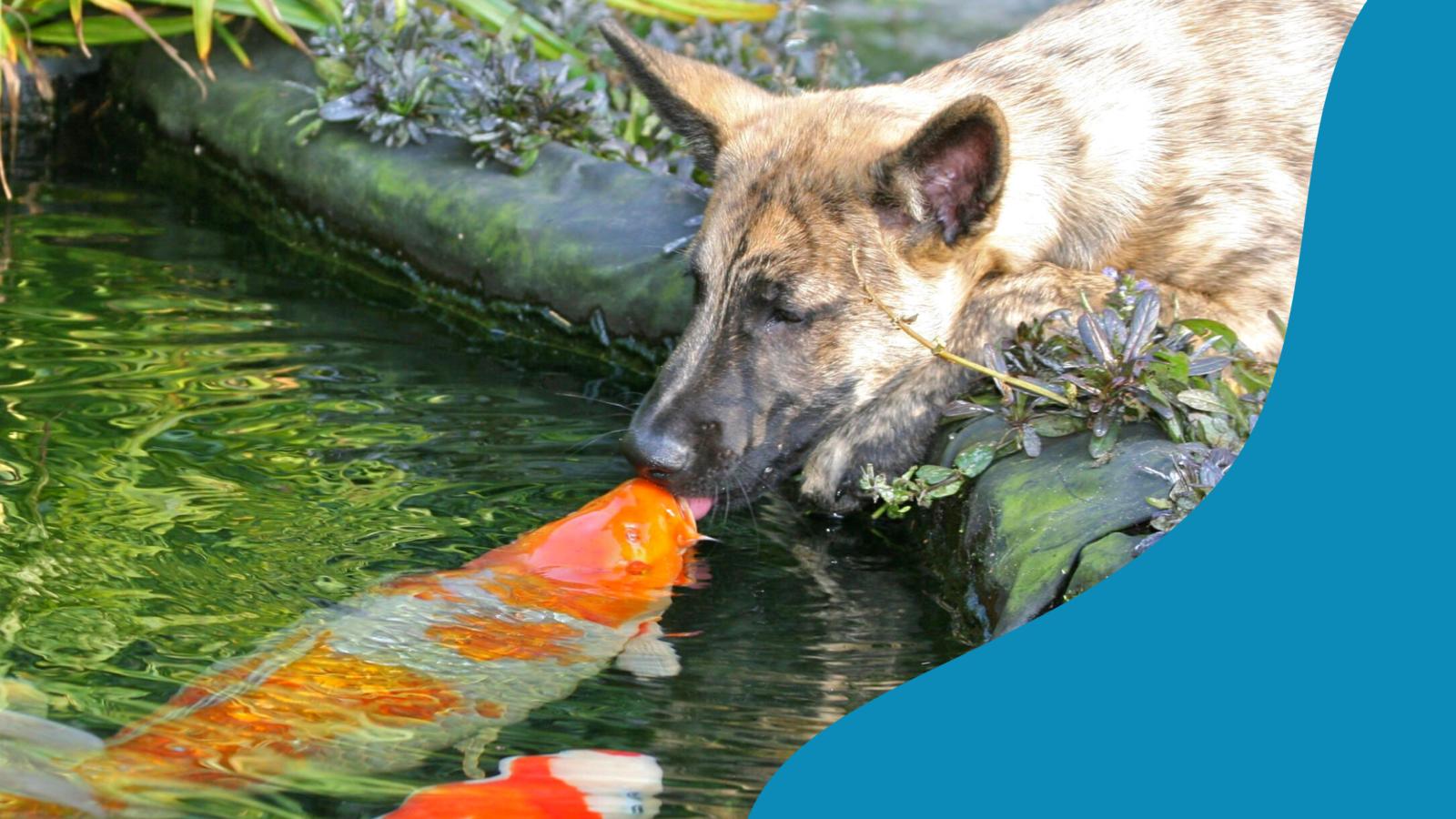 bele ihat-e a kutya a kerti tóba