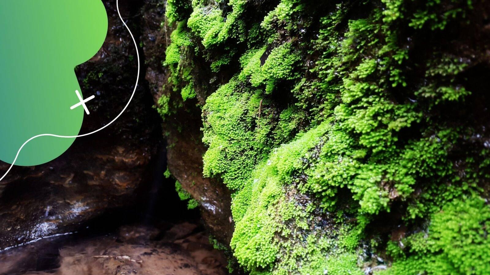Algák a kerti tóban, foszfátok és az algásodás