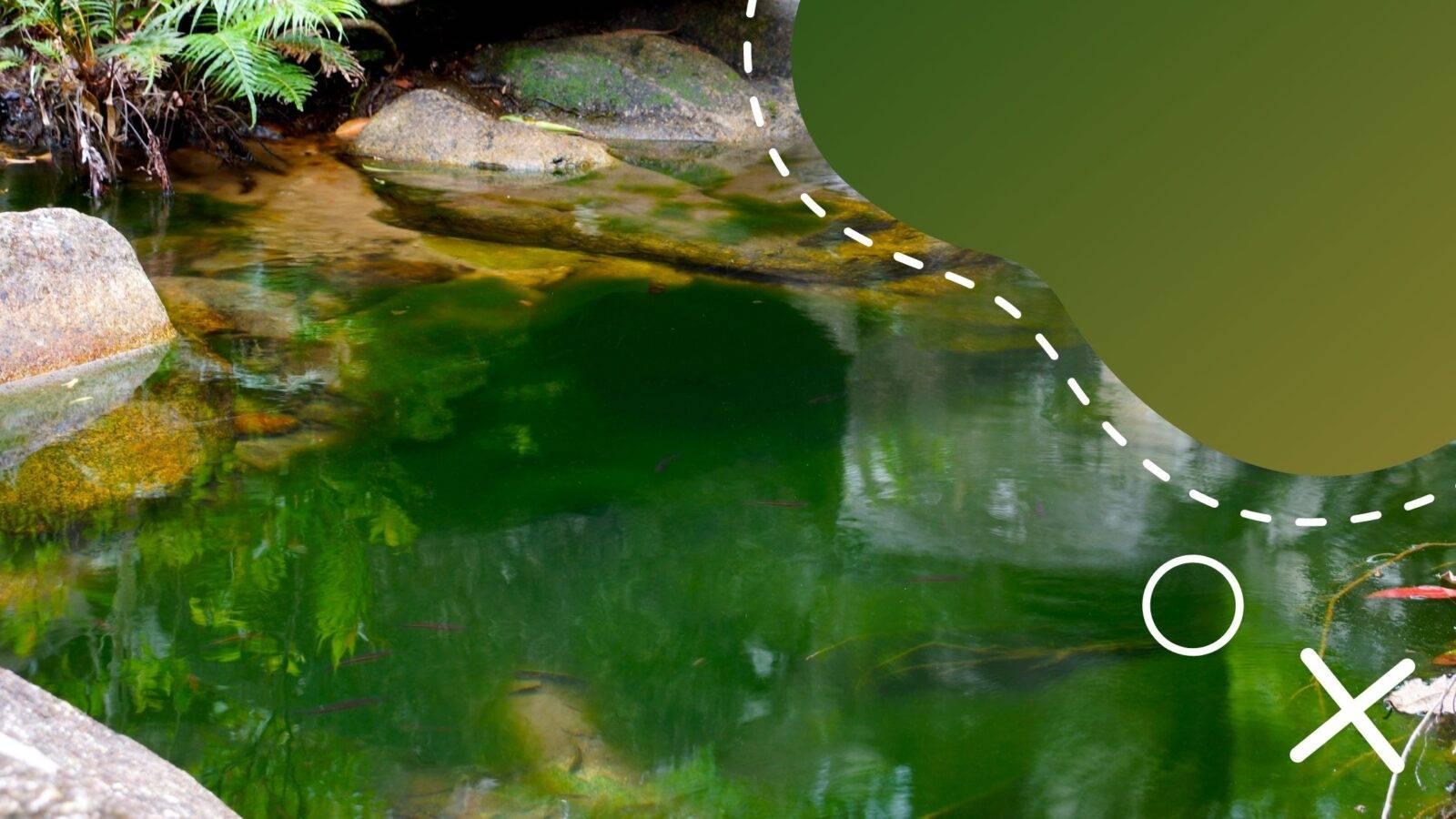 uv-c lámpa az alga ellen