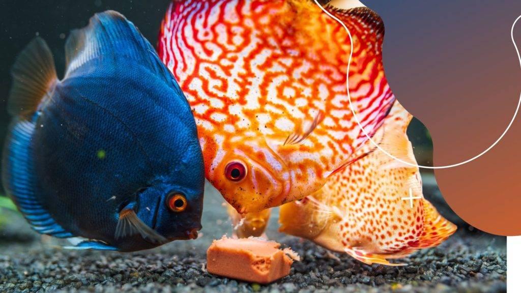 mivel etessük akváriumi halainkat