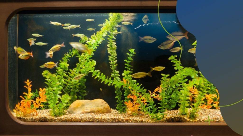 Retró akváriumok