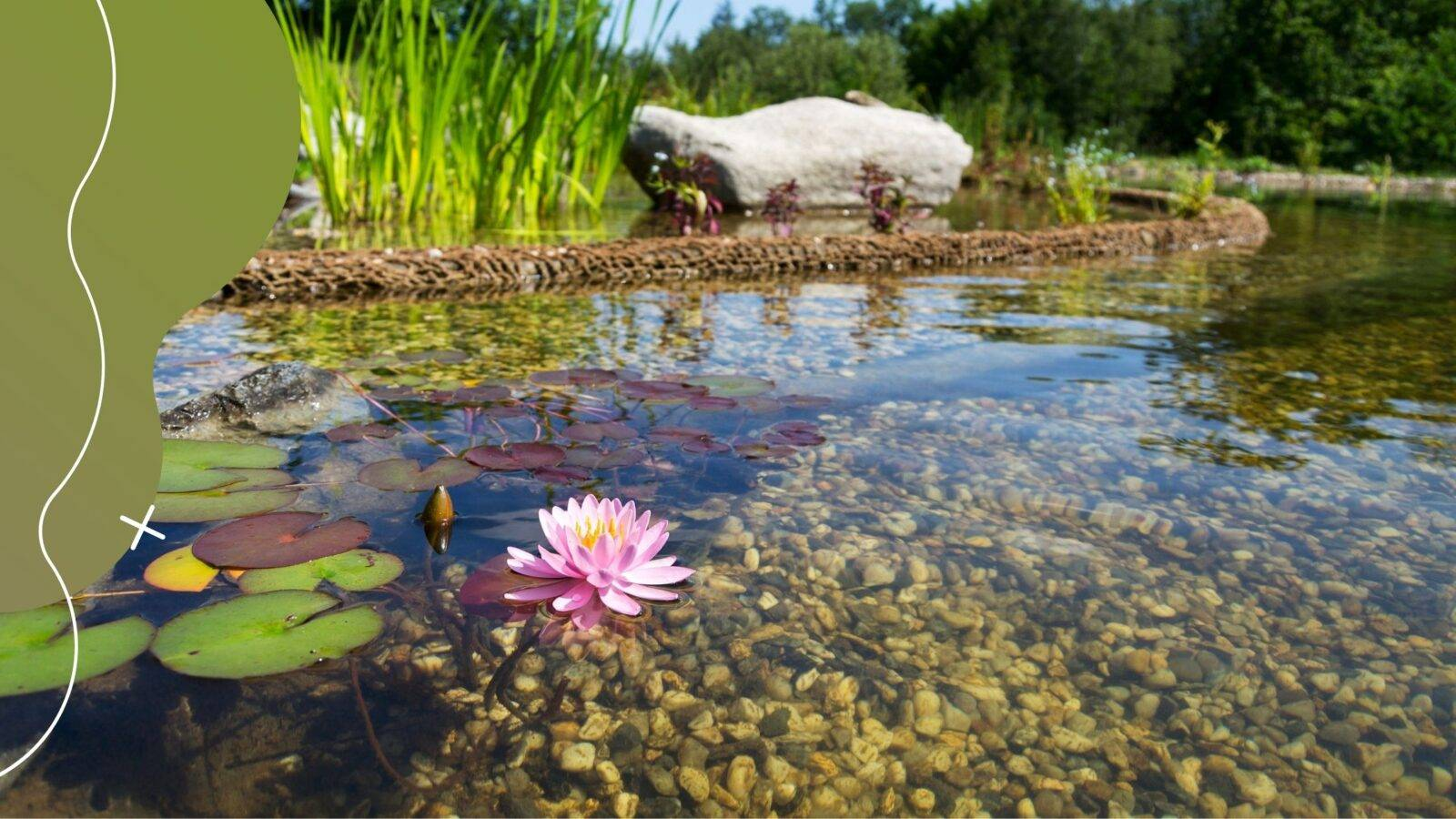 A kerti tó szűrése: Milyen az ideális kerti tavi szűrő