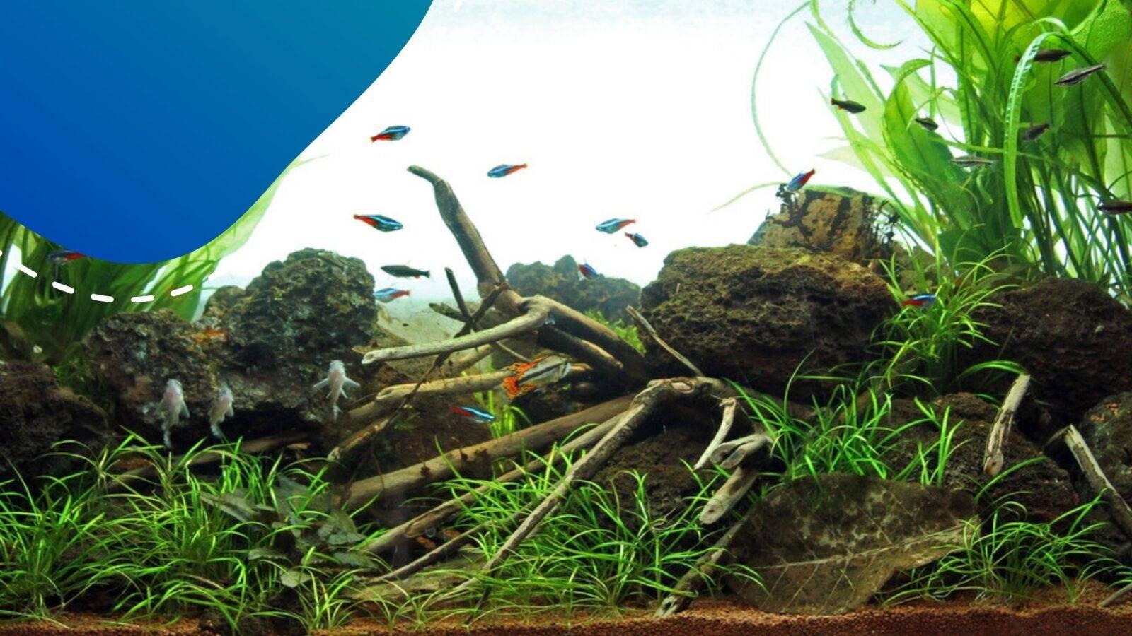 akvárium építése lépésről lépésre
