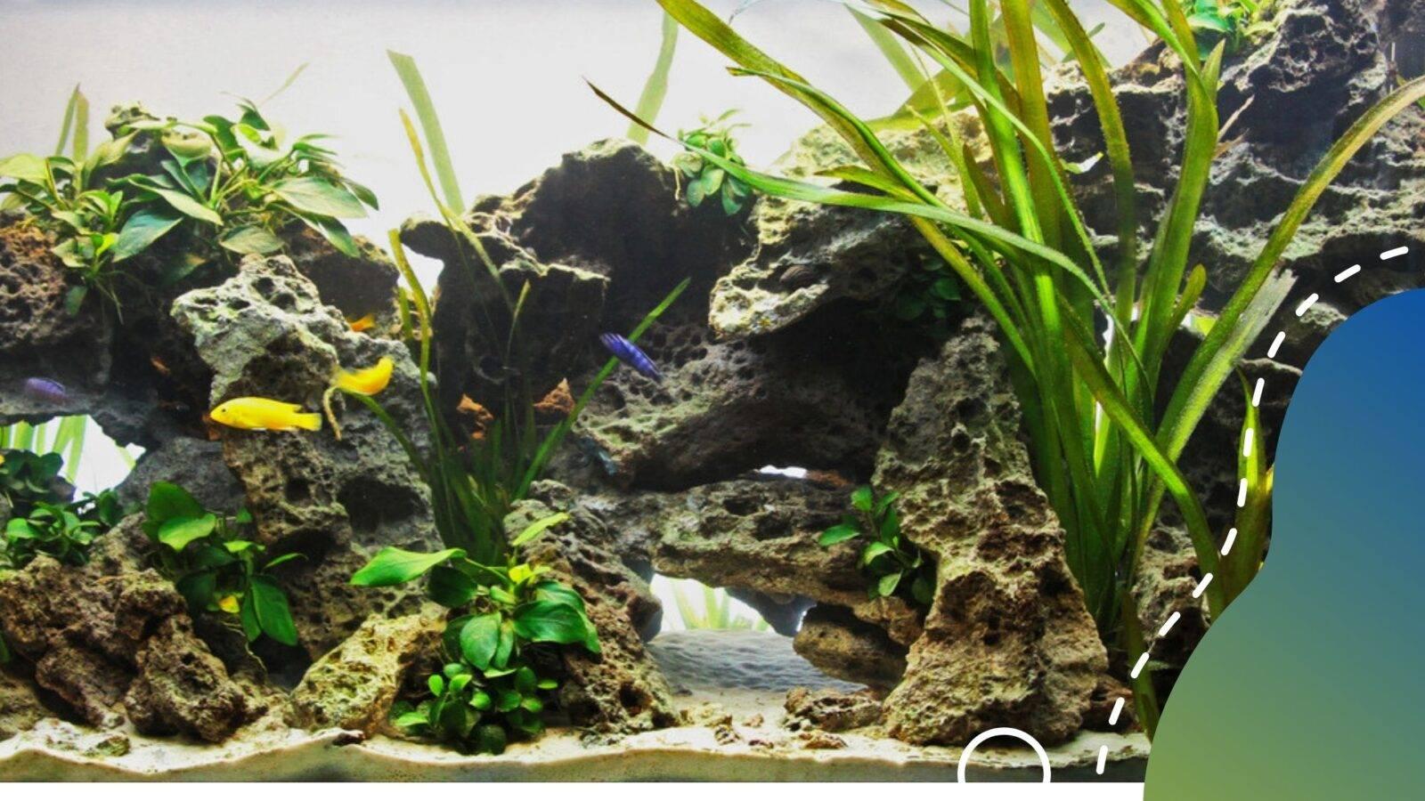 sügeres akvárium építése lépésről lépésre