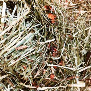 széna szárított répála nyulaknak tengerimalacnak