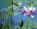 népszerű mocsári növények
