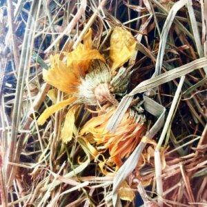 gyógynövényes széna nyulaknak, tengerimalacnak